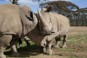 Monarto Zoo - Northern Rivers Accommodation
