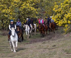 Burnelee Excursions on Horseback - Northern Rivers Accommodation