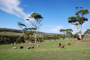 Lisieux Farm Bed and Breakfast - Northern Rivers Accommodation